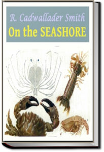 On the Seashore by R. Cadwallader Smith